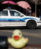 Duck Police Car by SusanG