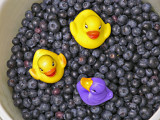 Picking blueberries by Lois Ann