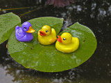 On a lily pad by Lois Ann