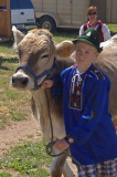 Brown swiss cow