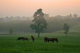 Korban-horses 065p2_edited-1.jpg