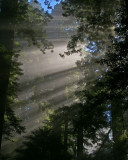 In the California redwood forest.