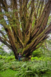 Me and a giant tree on the road to Campbelltown Argyll Scotland.jpg