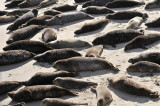 Exhausted Seals