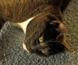 Carpet Meditation