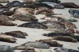 La Jolla Seals