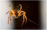 Backlit spider (yuck).