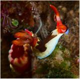 Nudibranch.