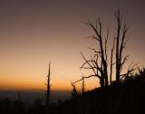 Bristlecone - White Mountains