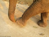 734_s-2674_stepping on trunk.jpg