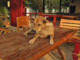 734_s-2676_dog at eating area.jpg