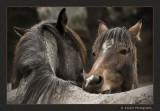 Friends - Wild Horses