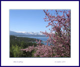 Lake Tahoe in Spring_34
