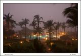 Unusual Foggy Morning in Paradise_