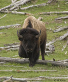 Yellowstone in Summer