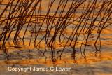 Sunset at Ibera Marshes