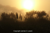Pampas dawn at Rincon de Cobo