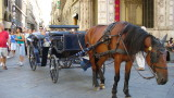 A carriage driver and his horse take a mid-day siesta.