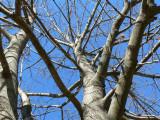 TreeBranches.JPG