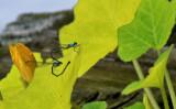 Dragonfly Love.JPG