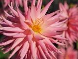 2008-09-13 Small flower...