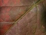 Leaf - 01