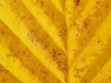 Leaf - 08