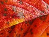 2008-10-09 Leaf - 09