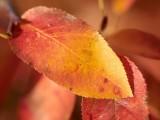 2008-10-12 Fall colours