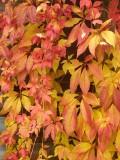 2008-10-16 Fall leafs in garden