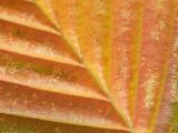 Leaf - 19