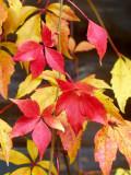 2008-10-20 Fall colours