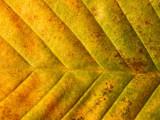2008-10-24 Leaf - 24