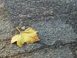 2008-10-28 Leaf