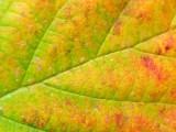 2008-10-31 Leaf - 31