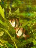 2008-11-09 Fish