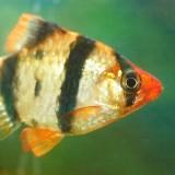 2009-03-10 Fish