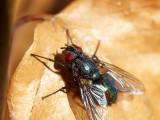 2009-05-03 Fly