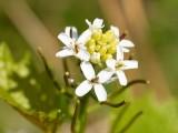 2009-05-13 White flower