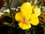 2009-05-07 Yellow