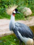 2009-08-03 African bird