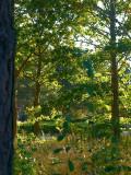 2009-09-29 Trees