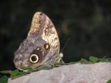 2010-07-31 Butterfly