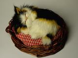 2006-02-07 Cat