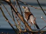 2006-03-14 Bird in tree