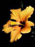 2006-07-19 Orange flower