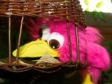 2008-05-16 Pink bird