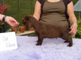 Lilly pups 247.JPG
