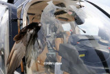 2008 - N407TT midair collision with a large bird photo #0189