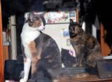 Boo & Elkie  (Snowstorm-122008-77.jpg)